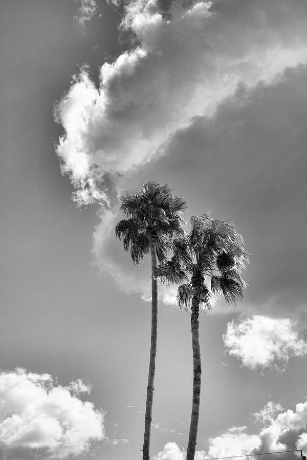 Twin Palms by Robert Wilder Jr