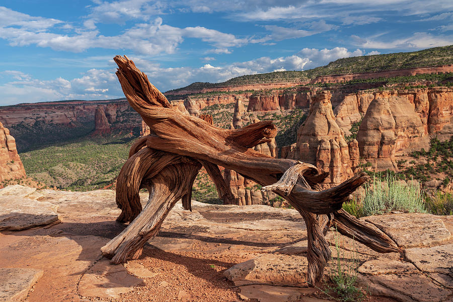 Twisted Dead treee on top of a mesa in Colorado National Monumen by Kyle Lee