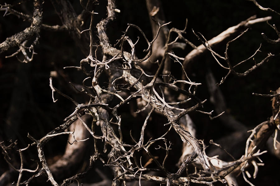 Twisted Dry Tree Branches by Yulia Kazansky
