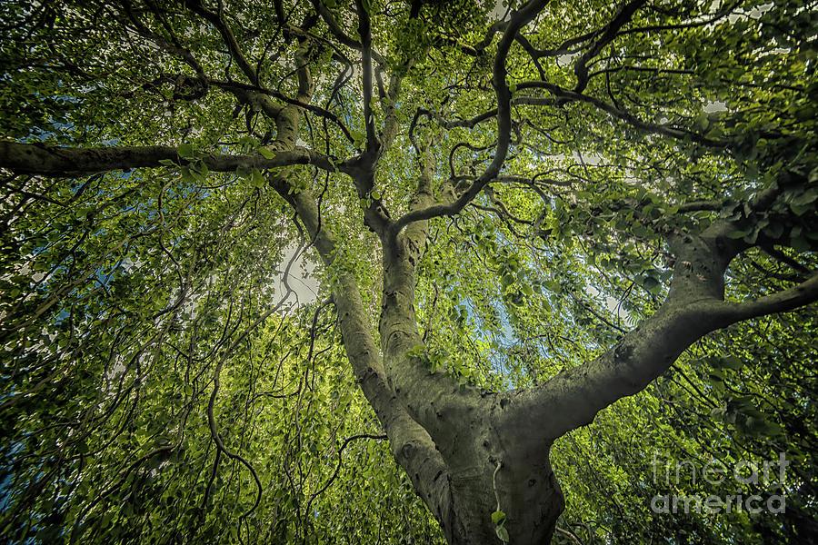Twisted Trees by Debra Fedchin