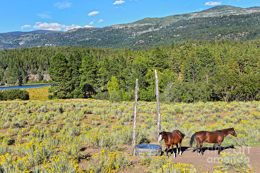 Two Horses in Rabbitbrush by Catherine Sherman