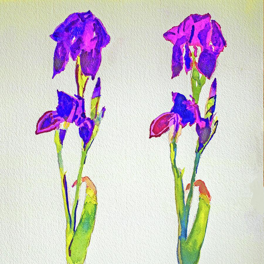 Two Irises by Paul Thompson