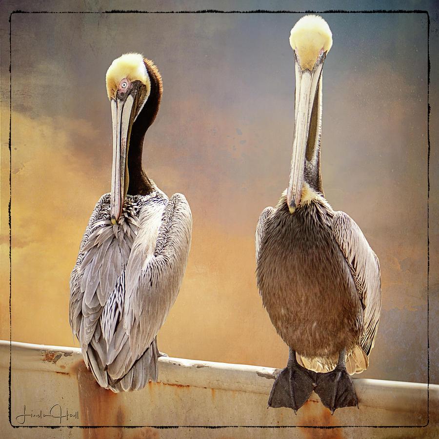 Pelicans Digital Art - Two Pelicans by Linda Lee Hall