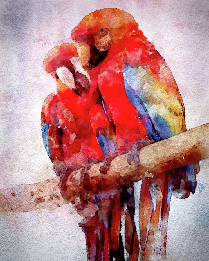Two Scarlet Macaws In Watercolor Digital Art