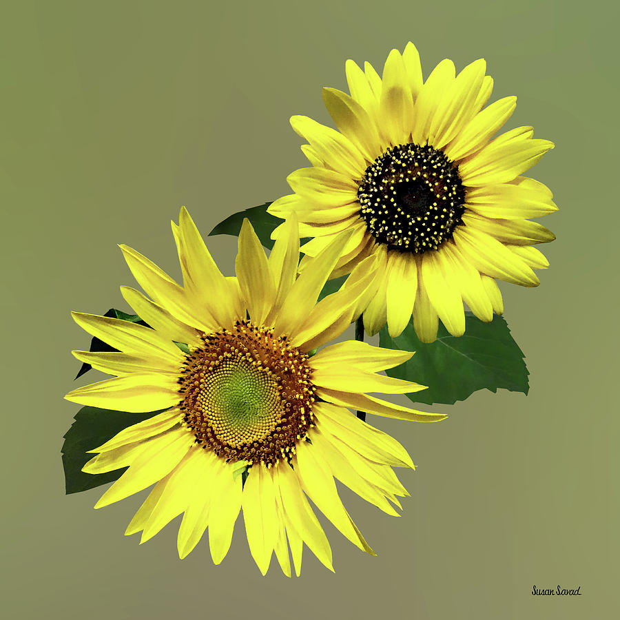 Two Sunflowers, The Same Yet Different by Susan Savad