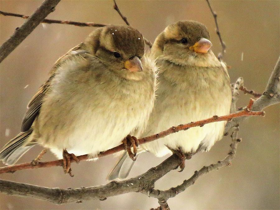 Two Together  by Lori Frisch
