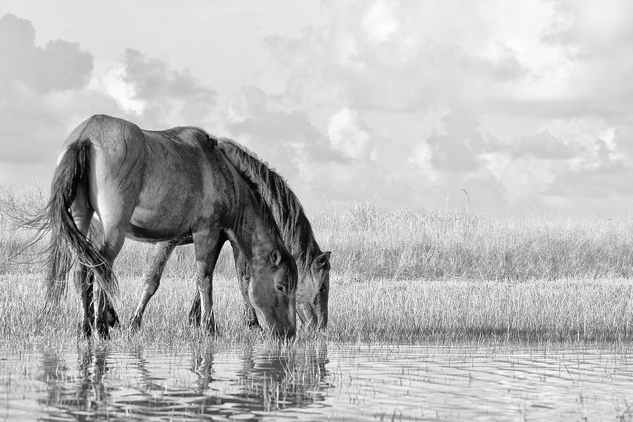 Two Wild Horses Of The Outer Banks Photograph