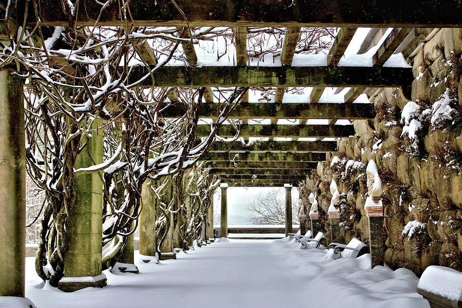 Under The Wisteria Pergola Covered in Snow by Carol Montoya