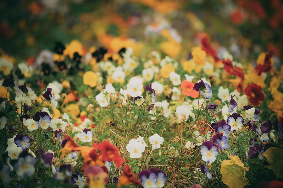 Undergrowth Photograph