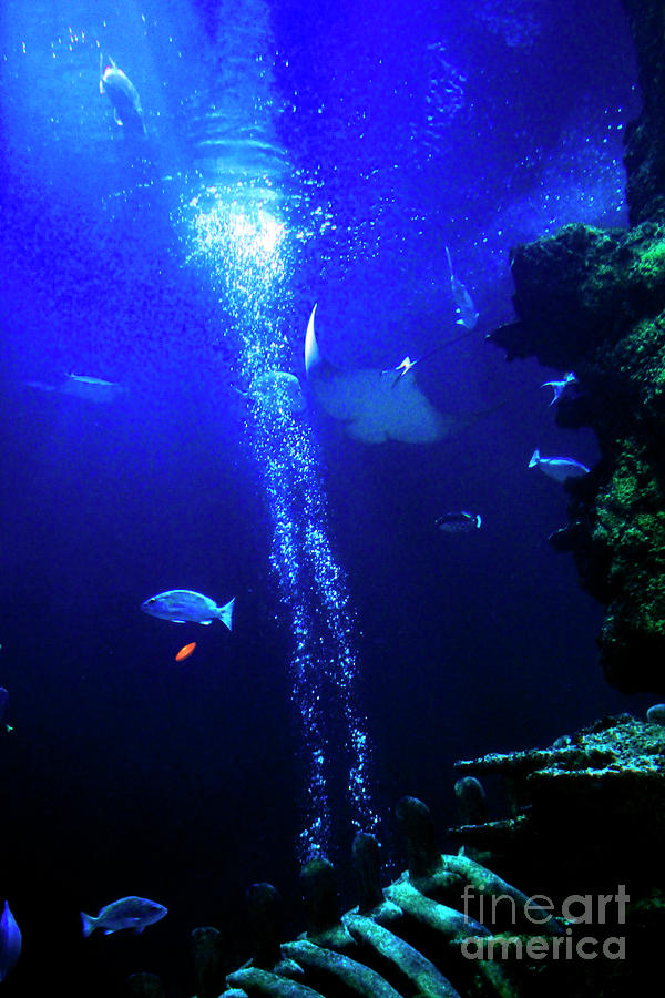 Underwater Environment by Doc Braham