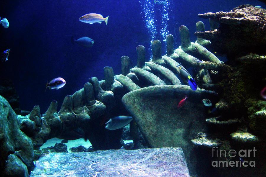 Underwater Environment - Study I by Doc Braham