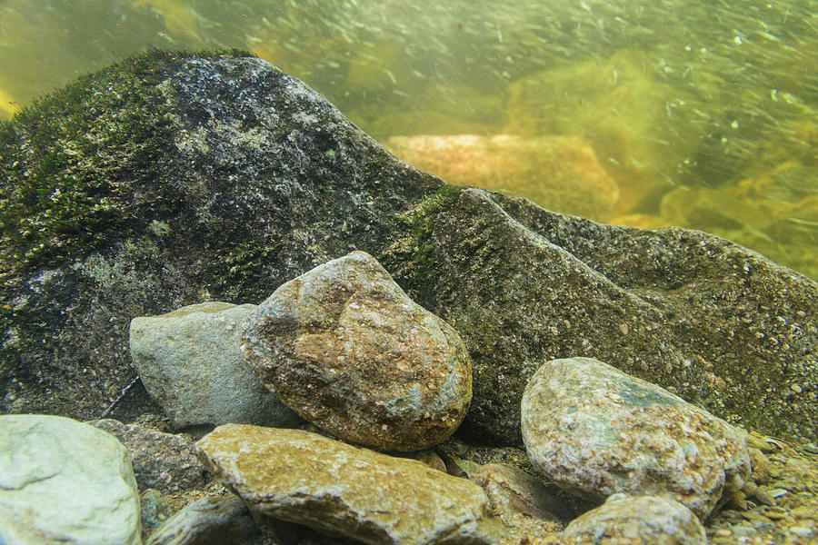 Blue Ridge Mountains Photograph - Underwater Landscape by Melissa Southern