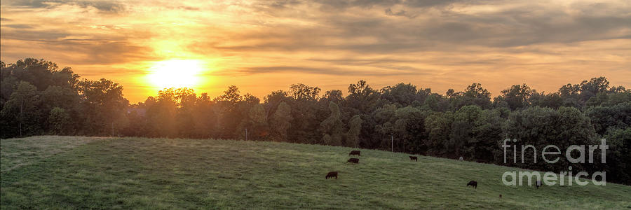 2015 Photograph - Until the Cows Come Home by Larry Braun