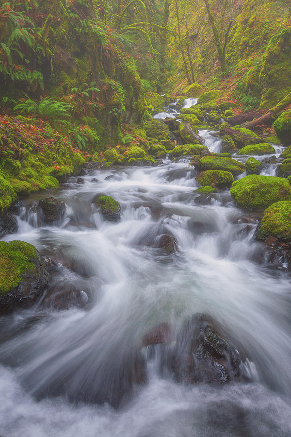 Water Photograph - Up a Creek by Darren White