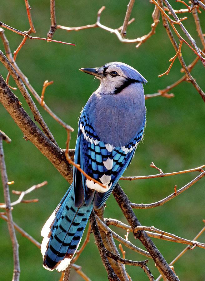 Birds Photograph - Up Close by John Bates