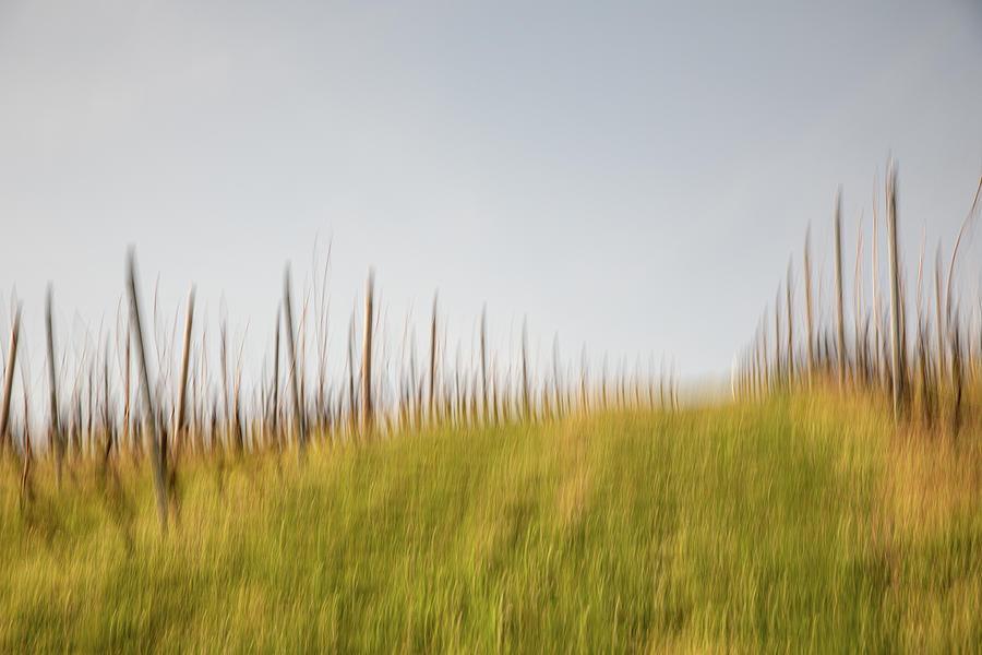 Vineyard Photograph - Up the Vineyard Hill in Zornheim Rheinhessen by Marion Rockstroh-Kruft