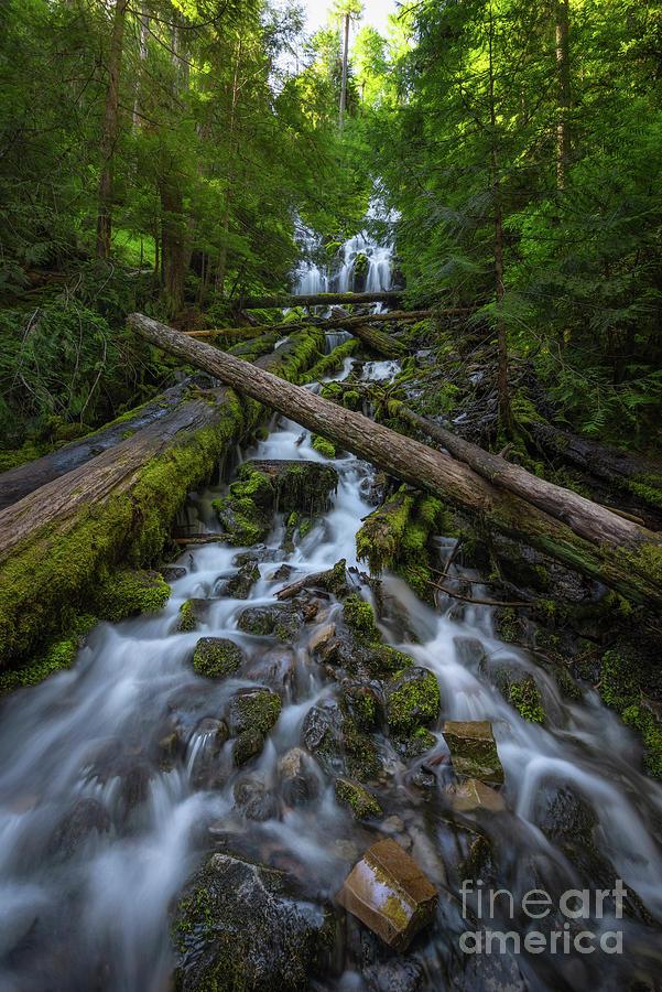 Upper Proxy Falls by Michael Ver Sprill