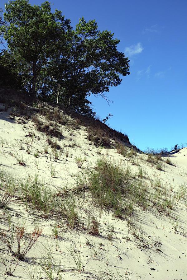 Upward Dune Photograph