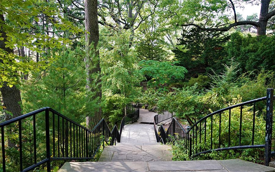 Urban Nature Trail Photograph