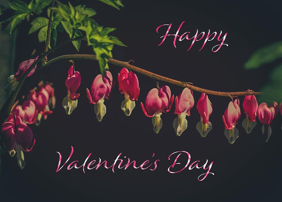 Valentines Day Greeting Card Bleeding Hearts Photograph