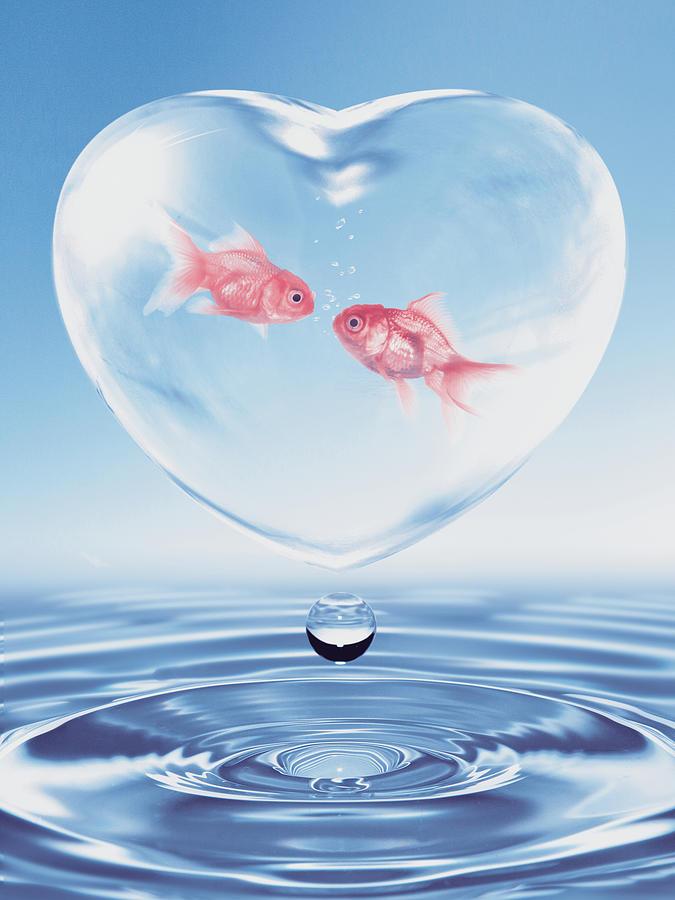 Valentines Fish Conversation Digital Art