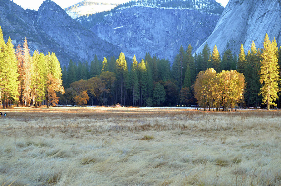 Valley Meadow 2020 Photograph