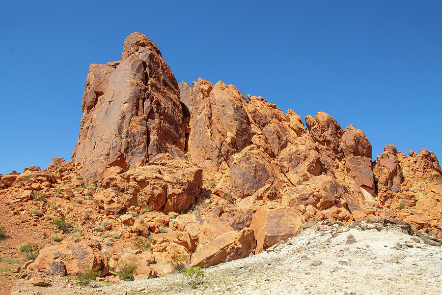 valley of fire Nevada blue sky vegetation red rock 2 2 3142020 0256 Photograph by David Frederick