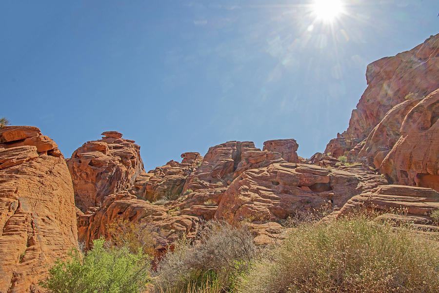 Valley of Fire Nevada sun, mountains red rocks, scrub vegetation blue sky March 2020 2 3222020 0465 Photograph by David Frederick