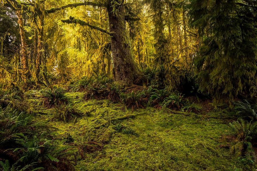 Valley of Moss by Bill Posner