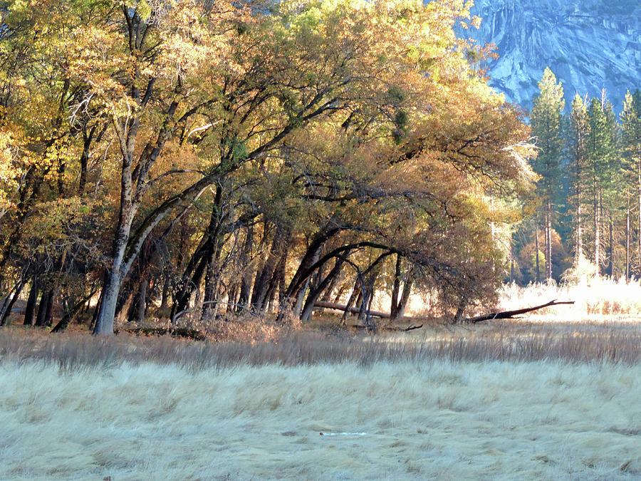 Valley Winter Trees 2 Photograph