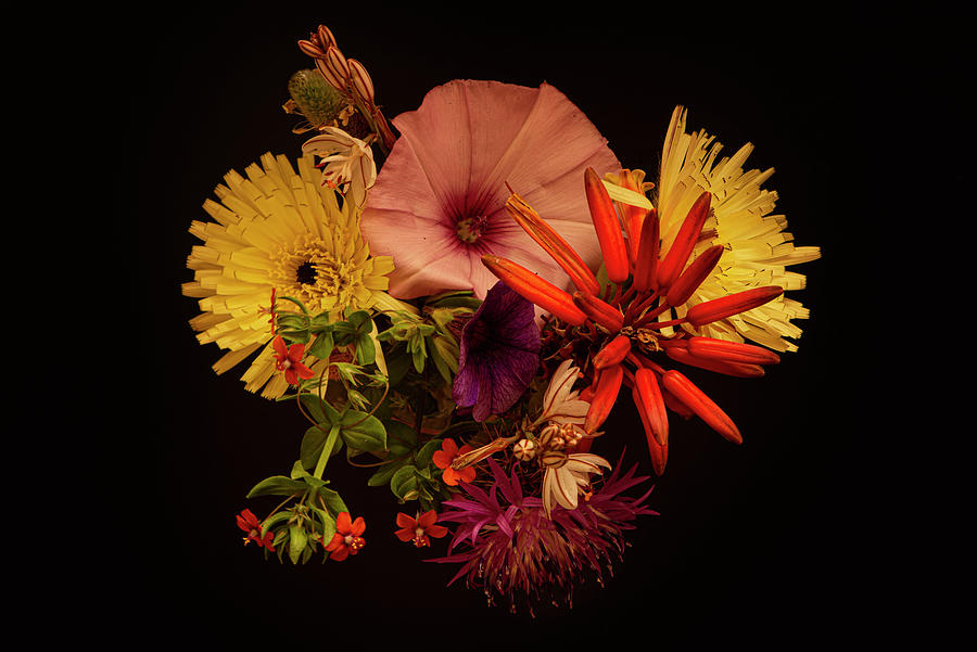 Various Flowers Of Different Colors With A Black Background Photograph