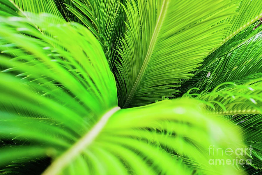 Vegetable background with palm leaves at sunset. by Joaquin Corbalan