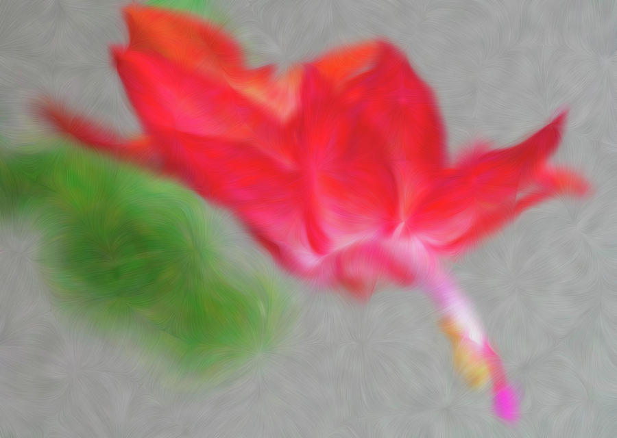 Vibrant Christmas Cactus Flower Bloom by Barbara Rogers
