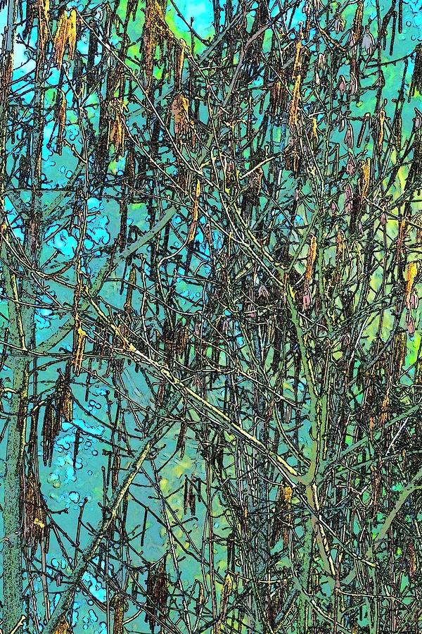 Vibrant Tree Seed Pod Blue Sky Photograph