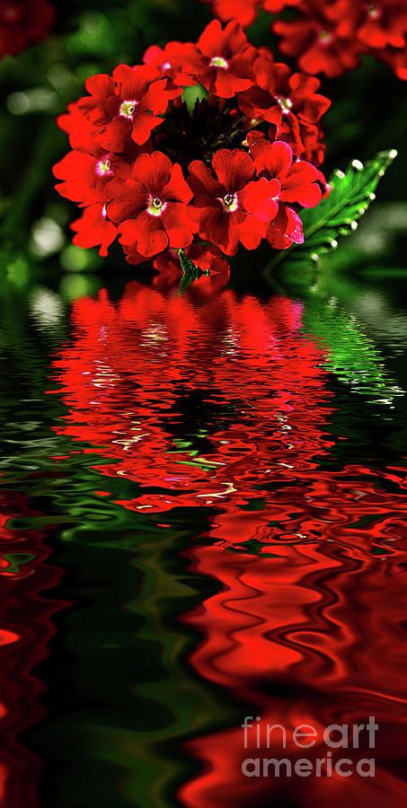 Vibrant Verbena Reflections 2 By Kaye Menner Photograph