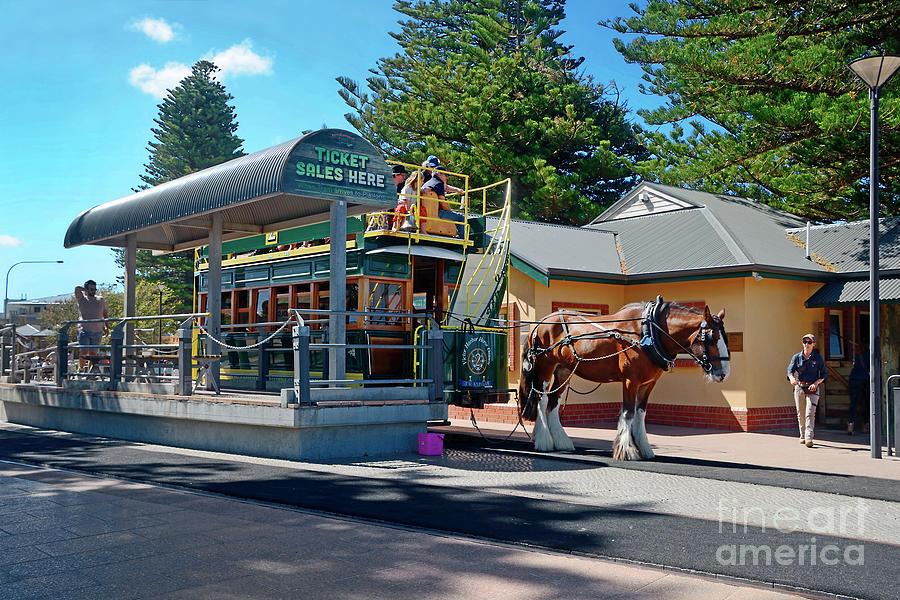 Victor Harbor Horse Drawn Tram By Kaye Menner Photograph