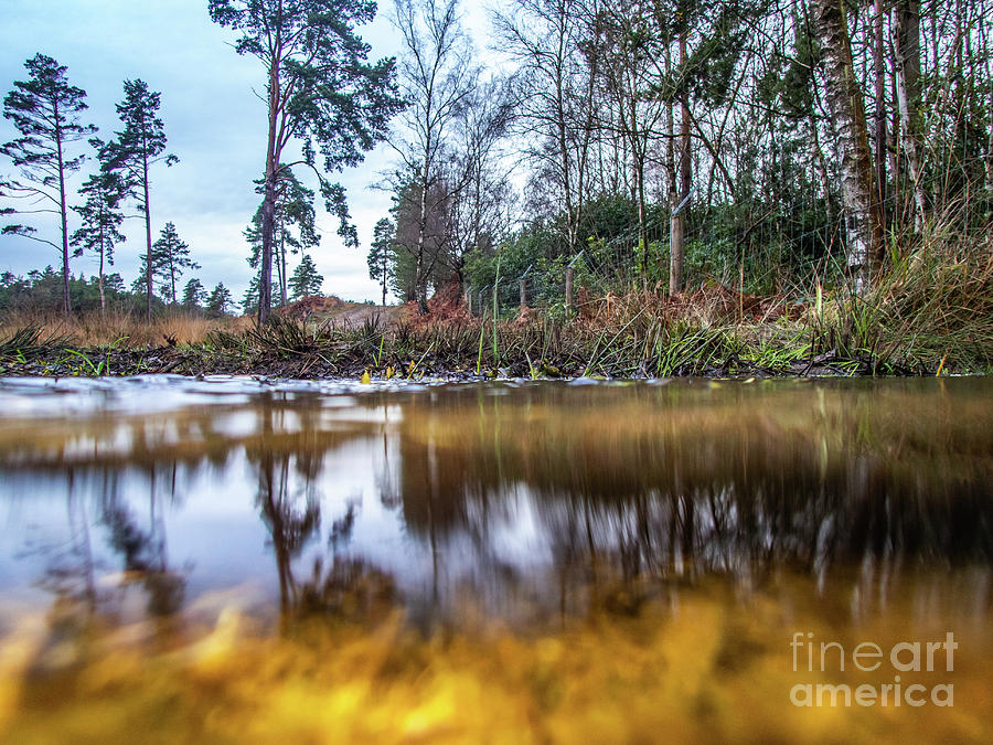 View across water and under water to forest scene by Richard Jemmett
