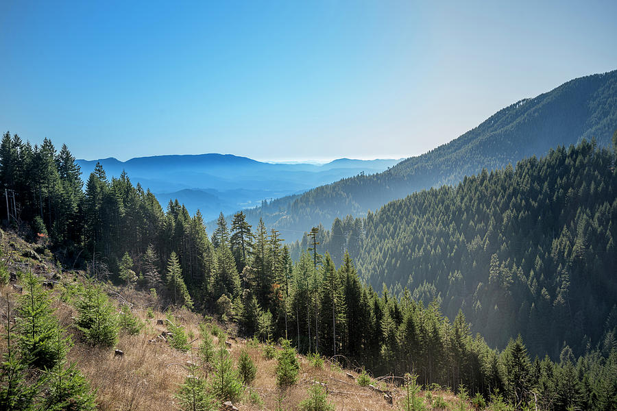 View from a logging road by Bill Posner