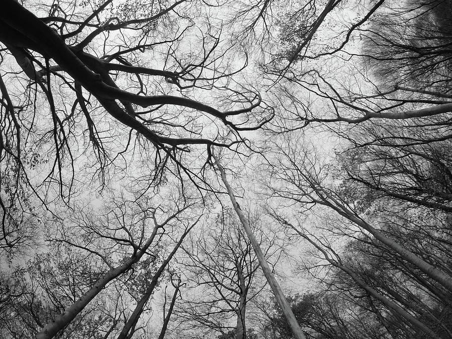 View From The Forest Floor Photograph