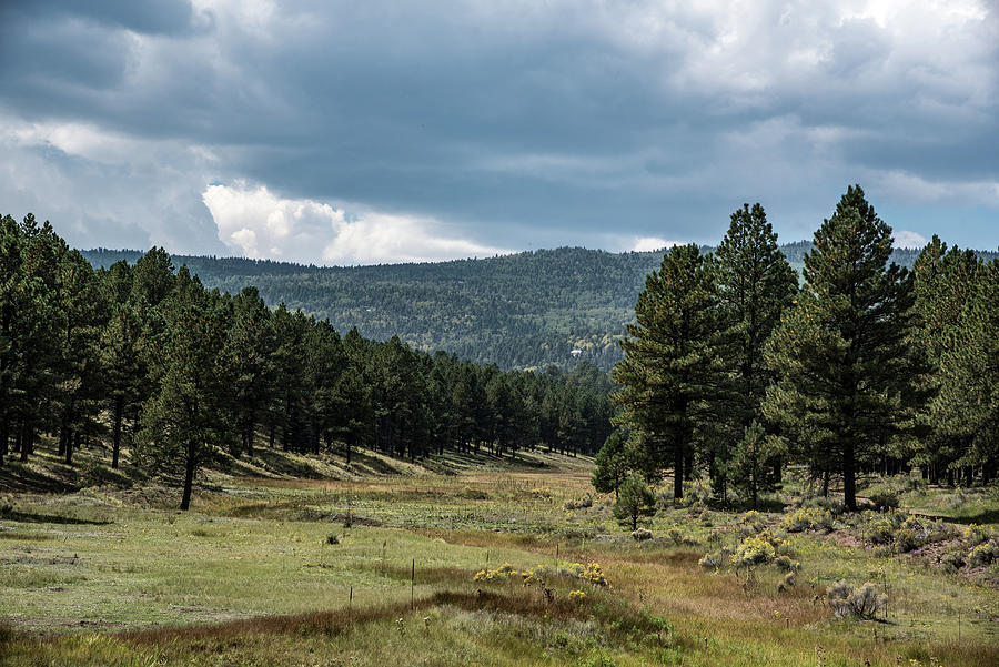 New Mexico Photograph - View of the Meadow by Lea Rhea Photography