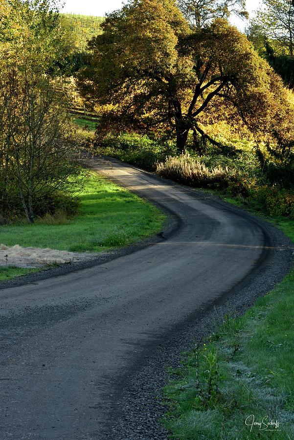 Vineyard Road by Jerry Sodorff