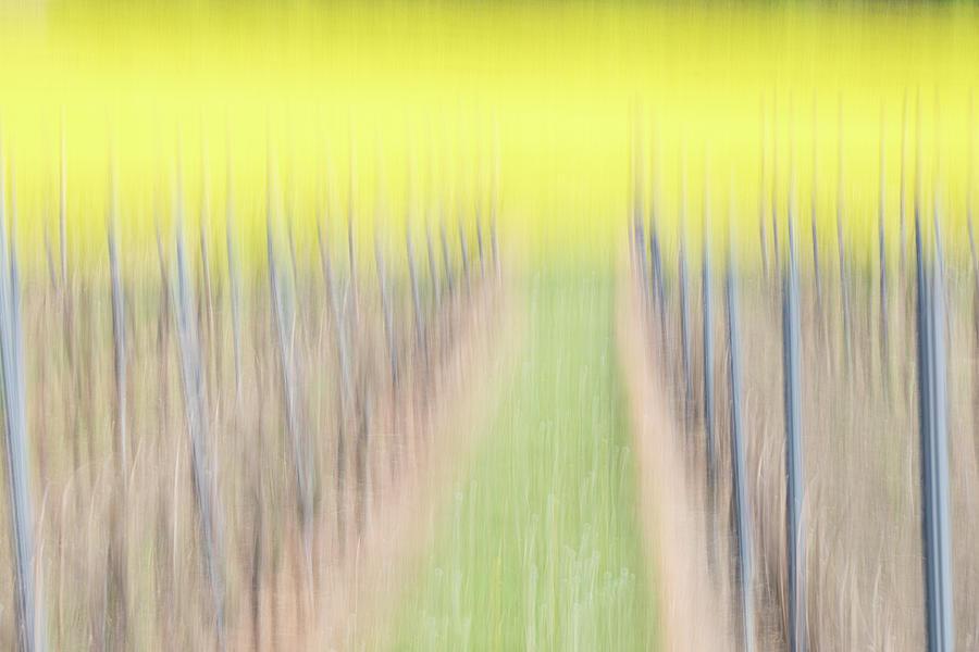 Vineyard Photograph - Vineyard with Rapeseeds by Marion Rockstroh-Kruft