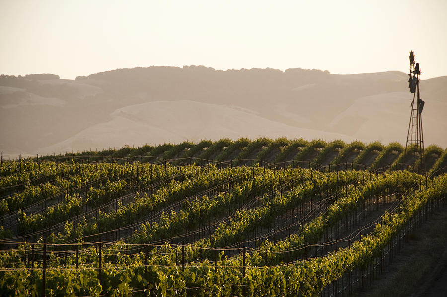 Vineyards and windmill near Sonoma, CA. Photograph by Tai Power Seeff