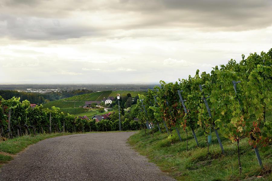 Vineyards in Sasbachwalden by RicardMN Photography