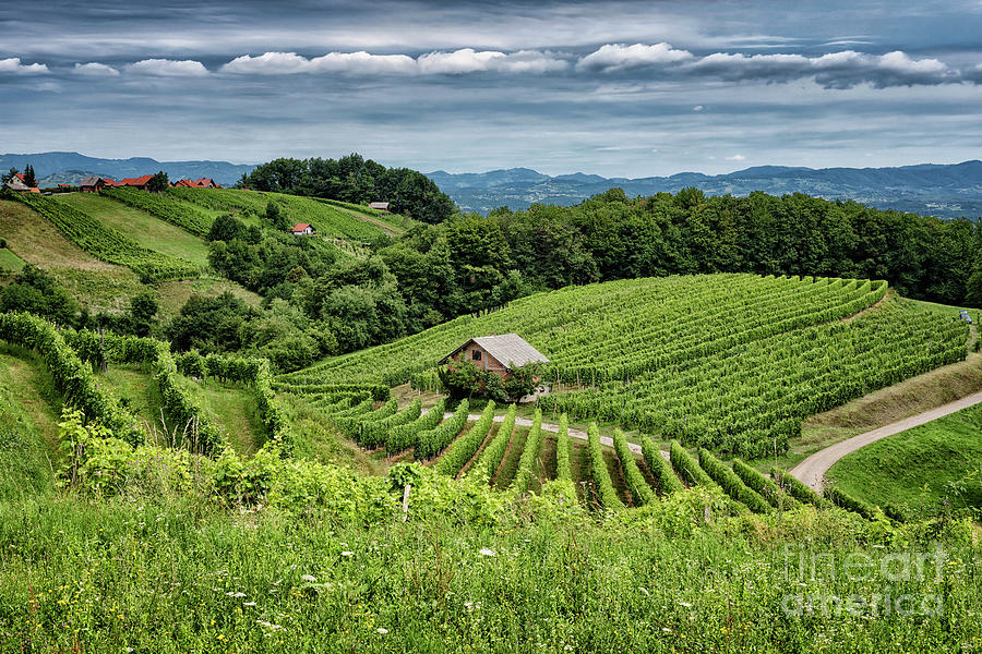 Vineyards Of Gadova Pec Photograph
