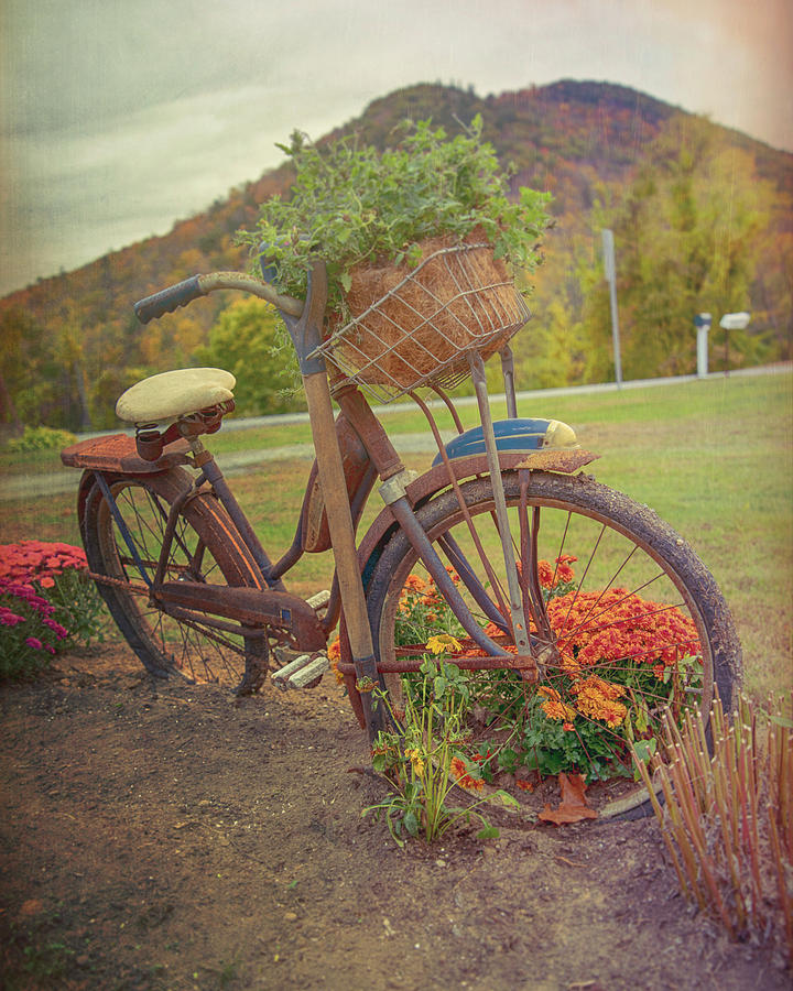 Vintage Bicycle Art by Joann Vitali