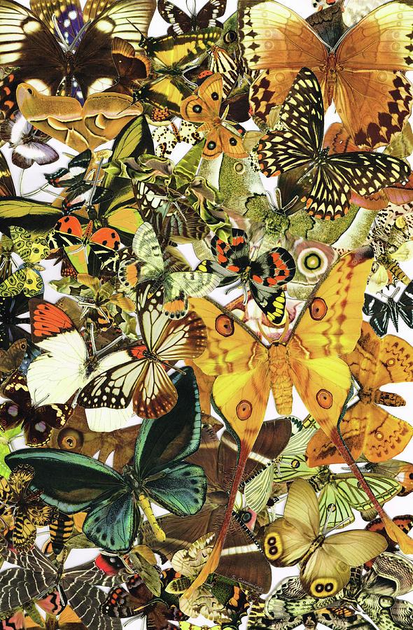 Butterfly Painting - Vintage Butterfly Art - Butterflies Galore - Sharon Cummings by Sharon Cummings