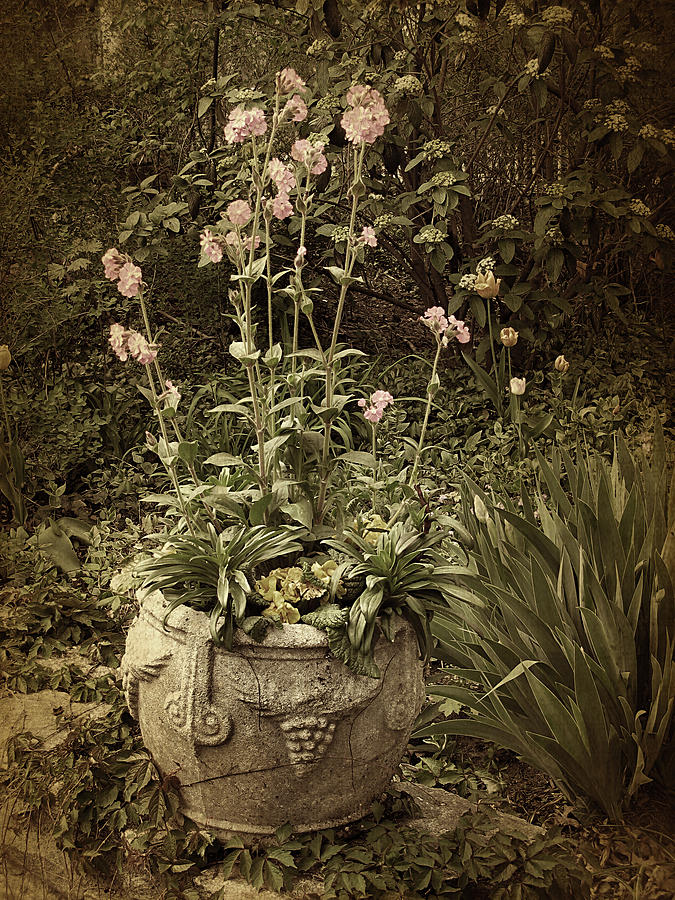 Planter Photograph - Vintage Planter by Jessica Jenney
