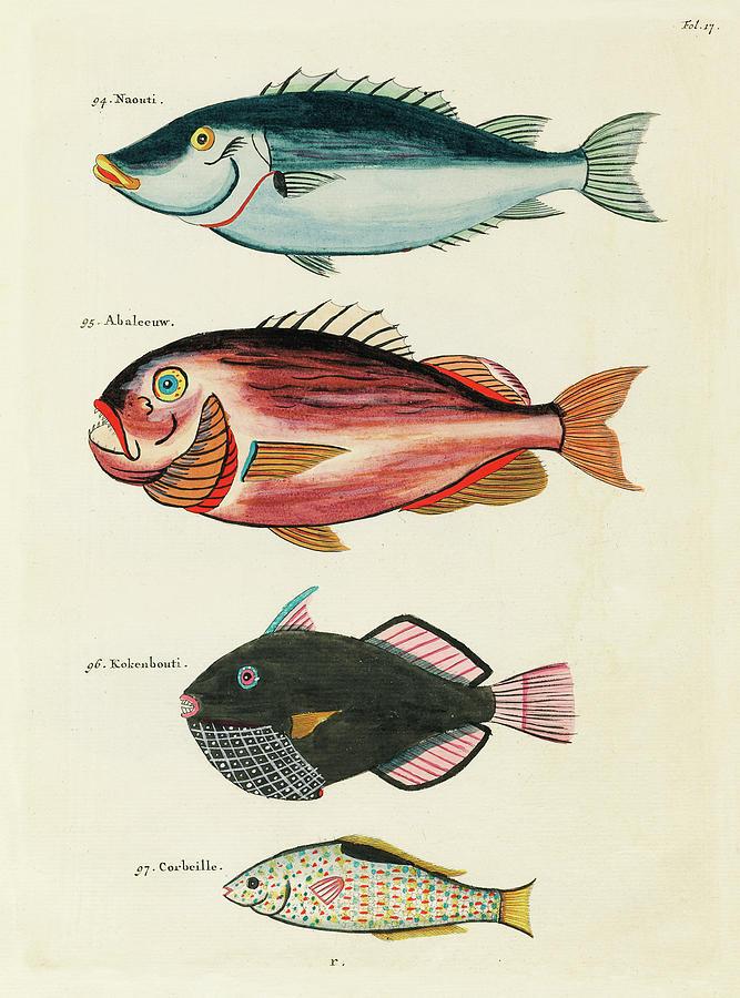 Vintage, Whimsical Fish And Marine Life Illustration By Louis Renard - Abaleeuw, Naouti, Kokenbouti Digital Art