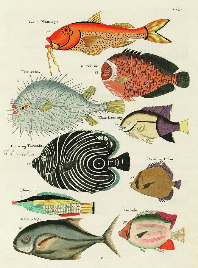 Vintage, Whimsical Fish And Marine Life Illustration By Louis Renard - Baard Mannetje, Formosa Digital Art